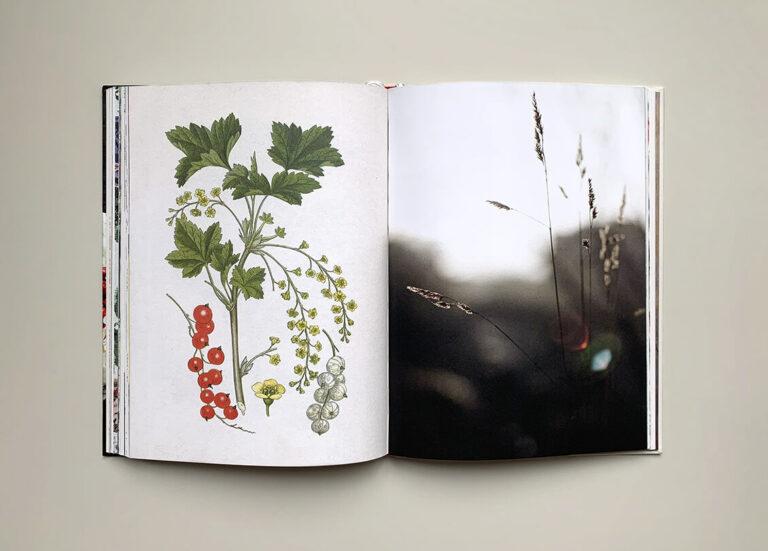"""Uppslag med illustration av röda vinbär och foto av grässtrån i boken """"Green sweets and treats"""""""