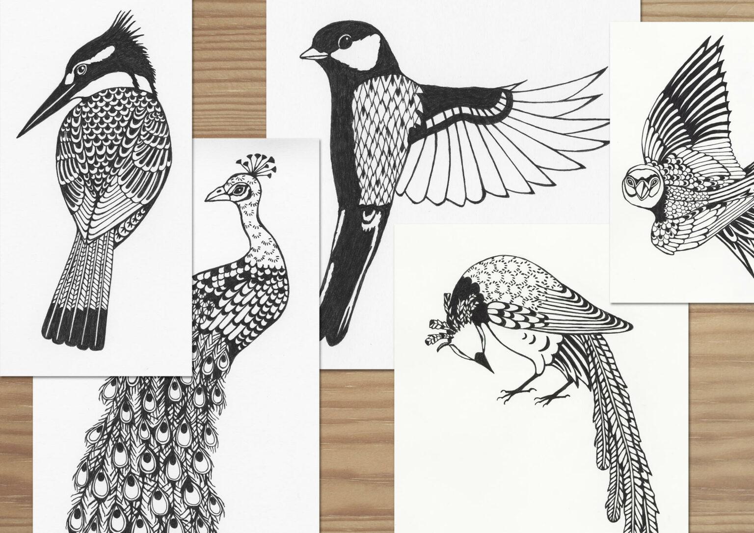 """Skisser av fåglar till alfabetet """"Ornis"""""""